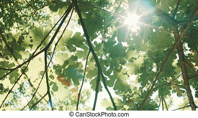 Sun rays Shine through the leaves - Look up fron sun rays...