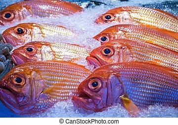 梭子魚,  fish, 銷售, 冰, 地方, 新鮮, 西雅圖, 市場