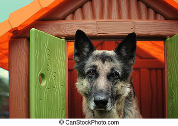 Dog In Toy House