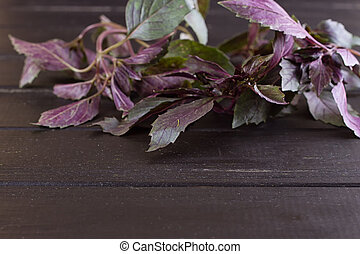 Bunch of basil on a black wooden background