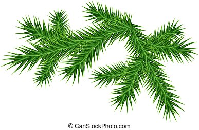 Green juicy pine branch. Isolated on white vector...