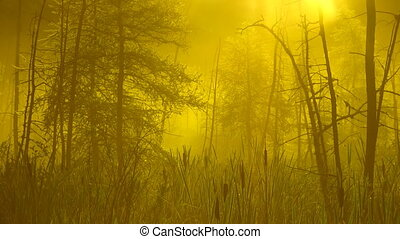 Morning mist in swamp. 2 shots.