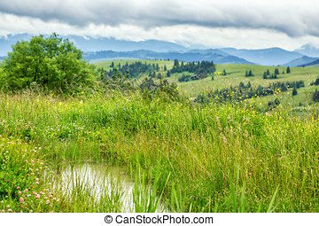 Small spring puddle in green grass on mountains background