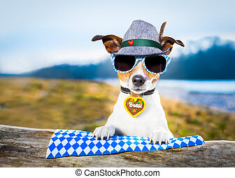 bavarian beer dog - bavarian jack russell dog outdoors by...