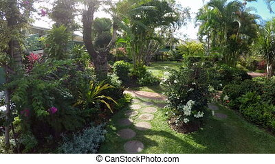 Leafy green garden - Lush green garden with tropical plants....