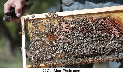 Bees inside beehive on honeycells