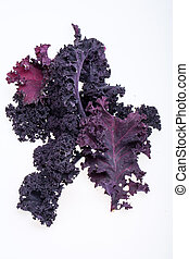 Freshly purple curly kale cabbage isolated on white...