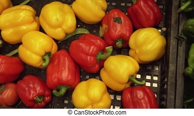 Capsicum annuum sold in supermarket stock footage video -...