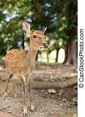 Wild deer in natural habitat wildlife