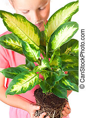 "Girl with houseplant ""Dieffenbachia picta Marianne"" isolated..."