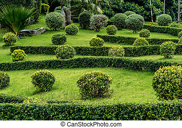 Trimmed bush plants - Trimmed bush with green lawn in the...
