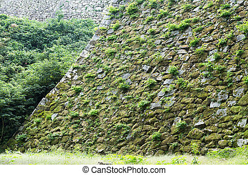 Wall with sprout and moss