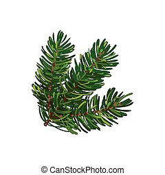 Hand drawn triple fir tree twig, branch, spruce