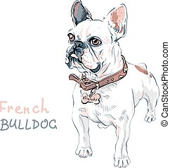 vector sketch domestic dog French Bulldog breed - Domestic...