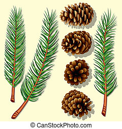 Pine Tree Branches and Cones Vector Illustration
