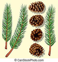 pino, árbol, ramas, conos