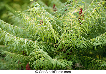 folhas, ramos, experiência verde