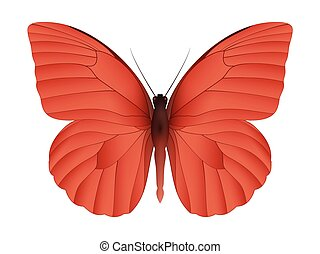 Beautiful butterfly isolated on a white background. Appias...