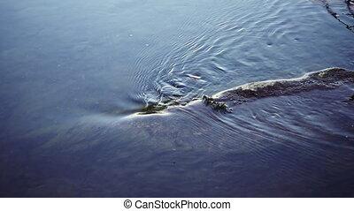 Water stream flows around log in slow motion - Water stream...