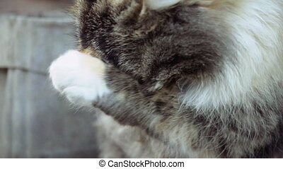 Cute little cat washes itself in slow motion. Cats used to...
