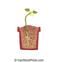 Green plant growing from seed of a bean in a pot with ground soil, stage of growth, pot in a cross section vector Illustration