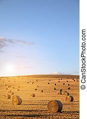 hay-roll on meadow against background