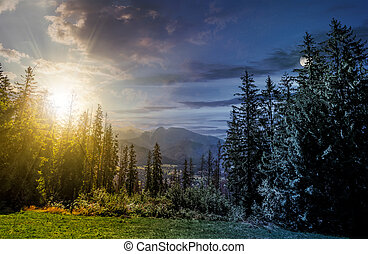 Spruce forest in High Tatras time concept - day and night...