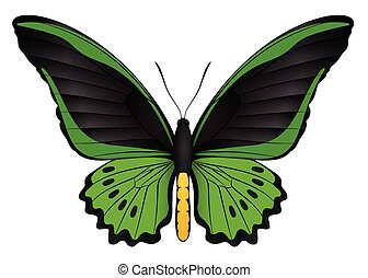 Beautiful butterfly isolated on a white background. Cairns...