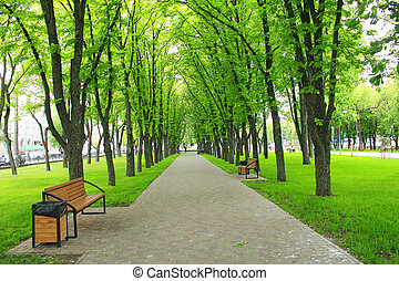Beautiful park with green trees