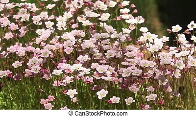 flowering bright flowers background