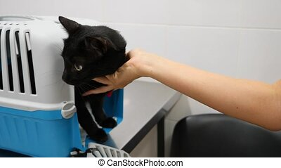 Veterinarian doctor checking cat at a vet clinic. 4K. Slow...