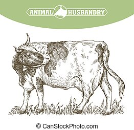 sketch of cow drawn by hand. livestock. cattle. animal...