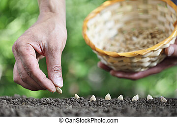 hand sowing seeds in the vegetable garden soil, close up with basket on green background