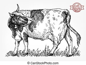 breeding cow. animal husbandry. livestock - breeding cow....