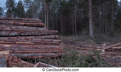 Slowly moving camera with view on logs