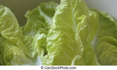 Fresh green lettuce in a salad bowl isolated on yellow...