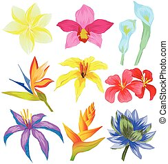 Vector set of Tropical flowers