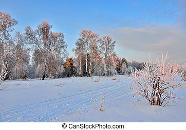 Pink twilight in the winter forest - beautiful winter landscape