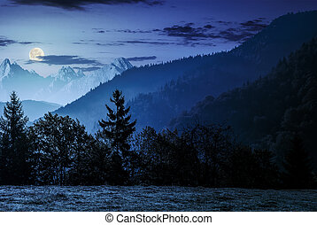 Forest on the hillside in High Tatras at night - Spruce...