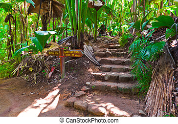 Pathway in jungle, Vallee de Mai, Seychelles - travel...