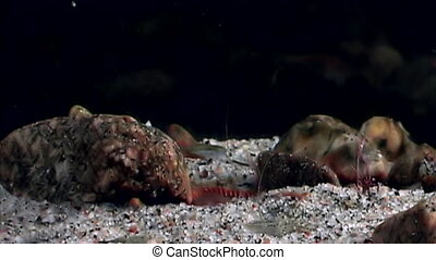 Unusual and unique life of fish under water on seabed of...