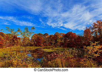 Colorful leaves on trees along lake in autumn, Autumn lake...