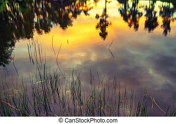 Sunset in the summer on the lake - Reflection of pines on...