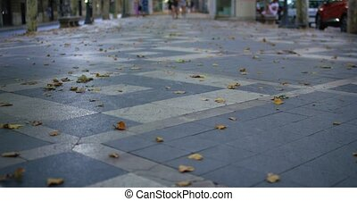 Walking down the street dog pov, Passeig del Borm, Palma de Mallorca, Spain. Shot in 4k slow motion