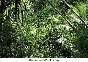 Bigodi Swamps - Uganda - Bigodi Wetlands in Uganda - The...