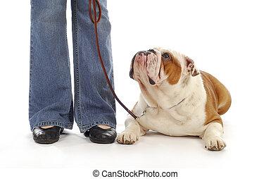 perro, obediencia