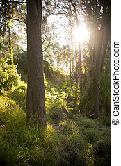 Fantasy Forest - Forest setting with sun streaming through...