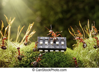 mrówki, gra, muzyka, Microchip, Fairytale