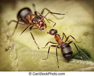 Żołnierz, pracownik, mrówki, niebezpieczeństwo