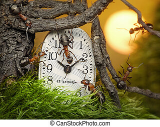 team of ants adjusting time on clock, fantasy - team of ants...